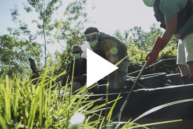 Les poissons migrateurs du Marais Poitevin
